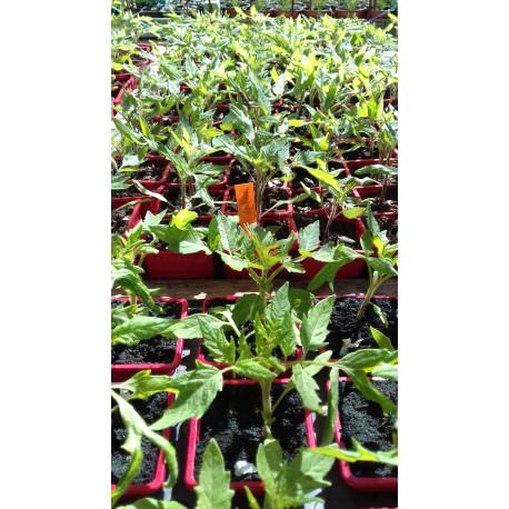 plant de Bern bio